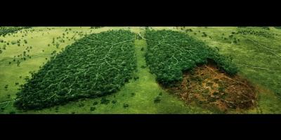 Pulmones: La tala de árboles está acabando con los pulmones de nuestro planeta