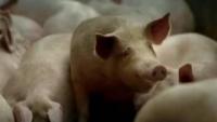 De la raspa de la piel del cerdo a las gominolas
